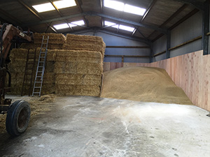 Barley in storage